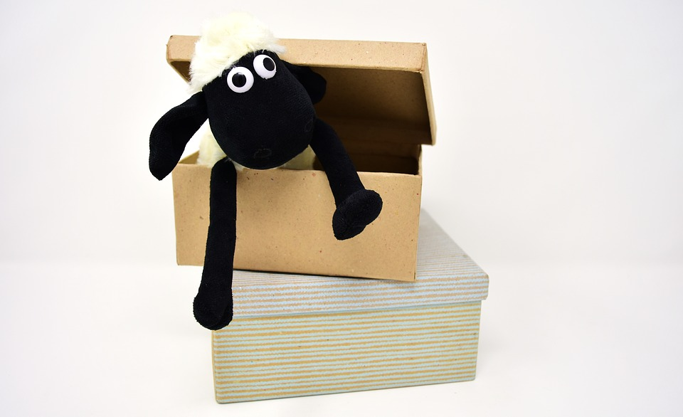 Sheep, Cardboard, Box, Cardboard Box, Open Carton, Open