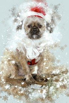 Bilder Weihnachten Tiere.100 Kostenlose Weihnachten Hund Und Hund Bilder Pixabay