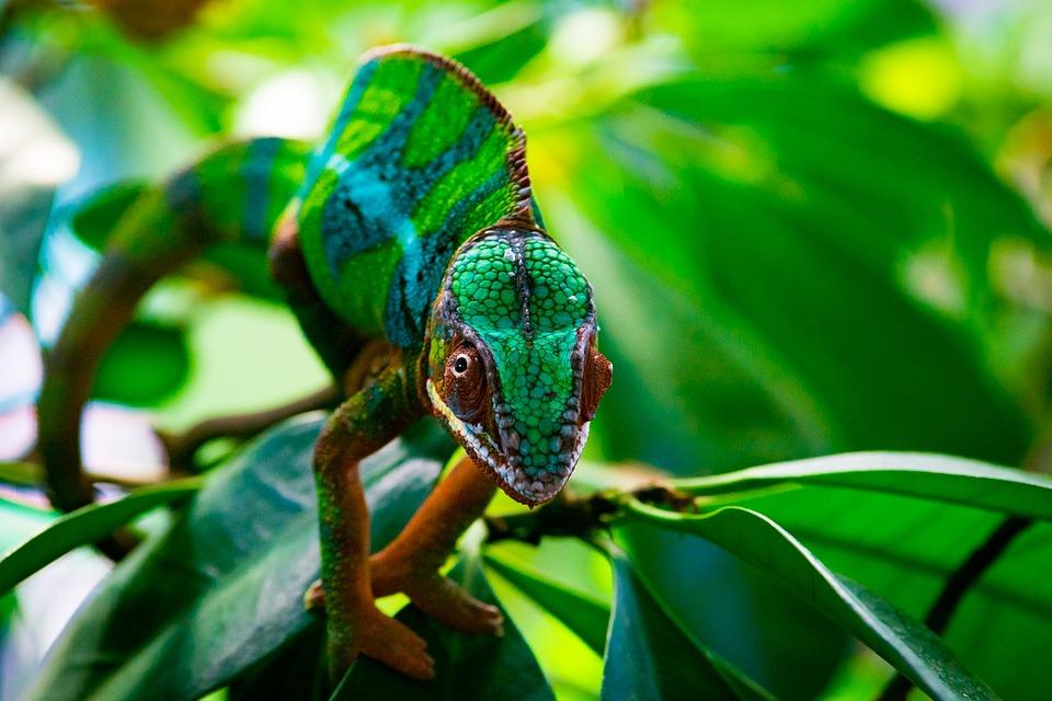 性质, 叶子, 动物世界, 动物, 树, 热带, 爬行动物, 异国情调