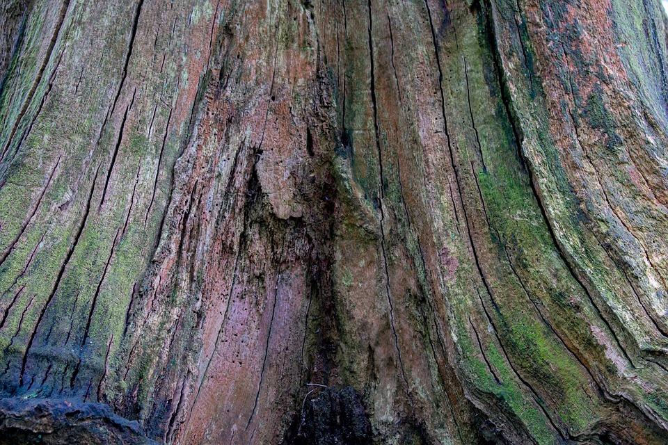 Bois vieux nature ordinateur de · photo gratuite sur pixabay