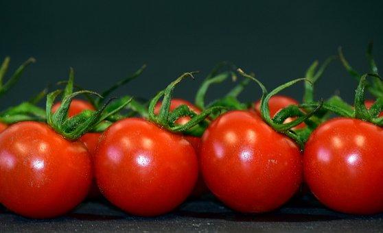 الطماطم، المعمرة الطماطم (البندورة)، بانيكل