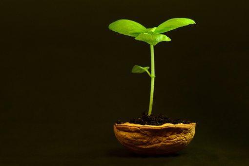 Planta, Pequeños, Hoja, La Naturaleza