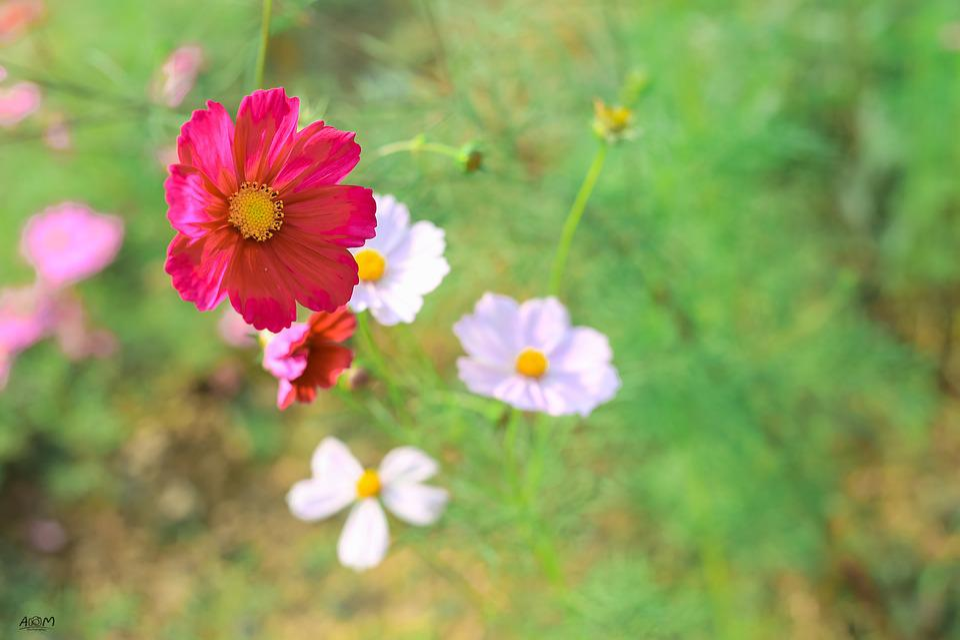 flowers pretty beautiful 183 free photo on pixabay