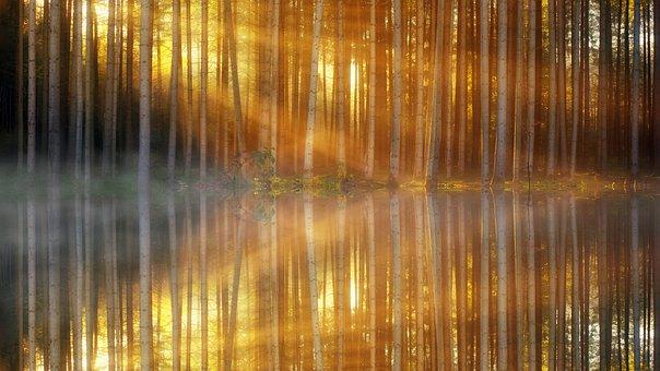 Pattern, Background, Forest