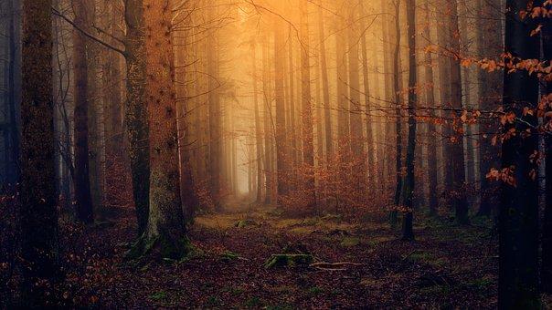 Skov, Lys, Tusmørke, Diset, Natur