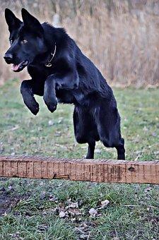 黒いドイツの羊飼い, 美容, ジャンプ, 犬, 機敏に動くスポーツ
