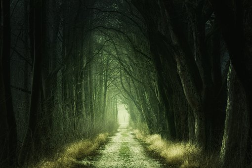 Secret, Darkness, Nature, Tunnel, Tree