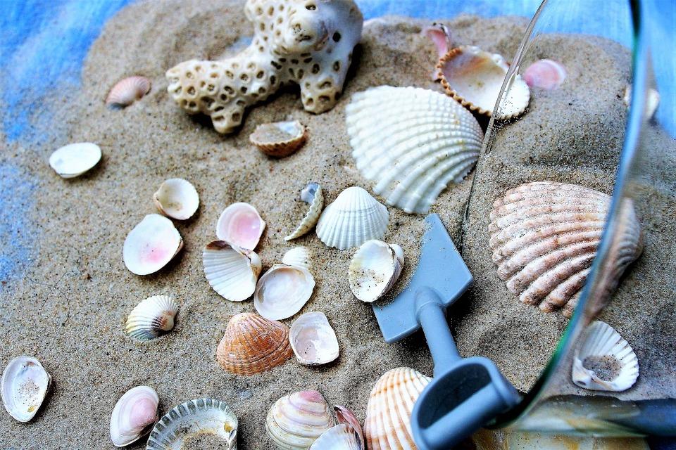 Coppa Conchiglia Sabbia · Foto gratis su Pixabay