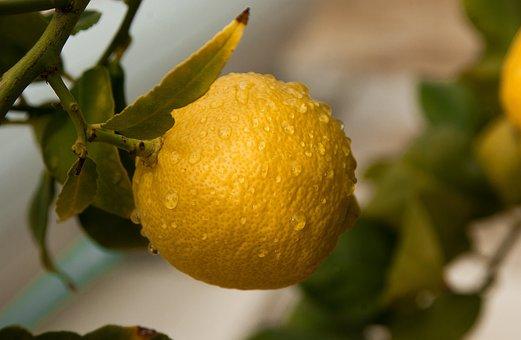 Fruit, Lemon, Citrus, Fruit Tree