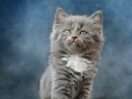 Cat, Cute, Mammal, Animal, Fluffy
