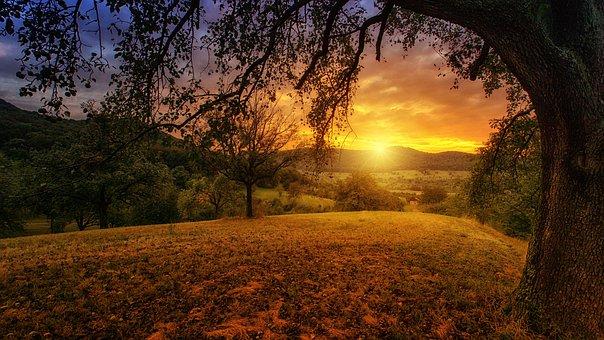 Φύση, Δέντρο, Αυγή, Τοπίο, Πανόραμα, Sun