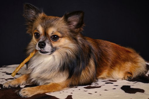 Teacup Puppies For Sale in Utah
