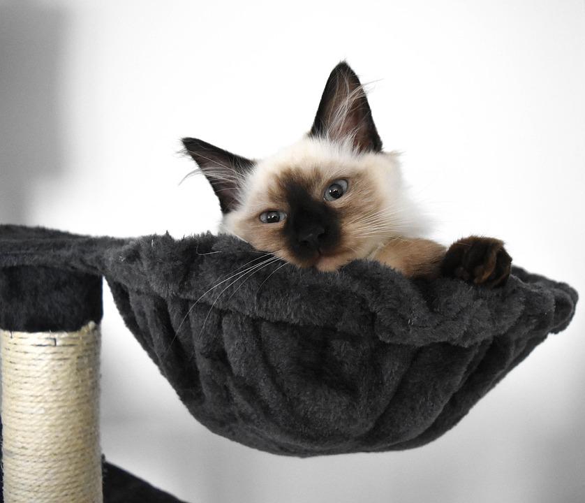 Alergia na kota, alergeny kota