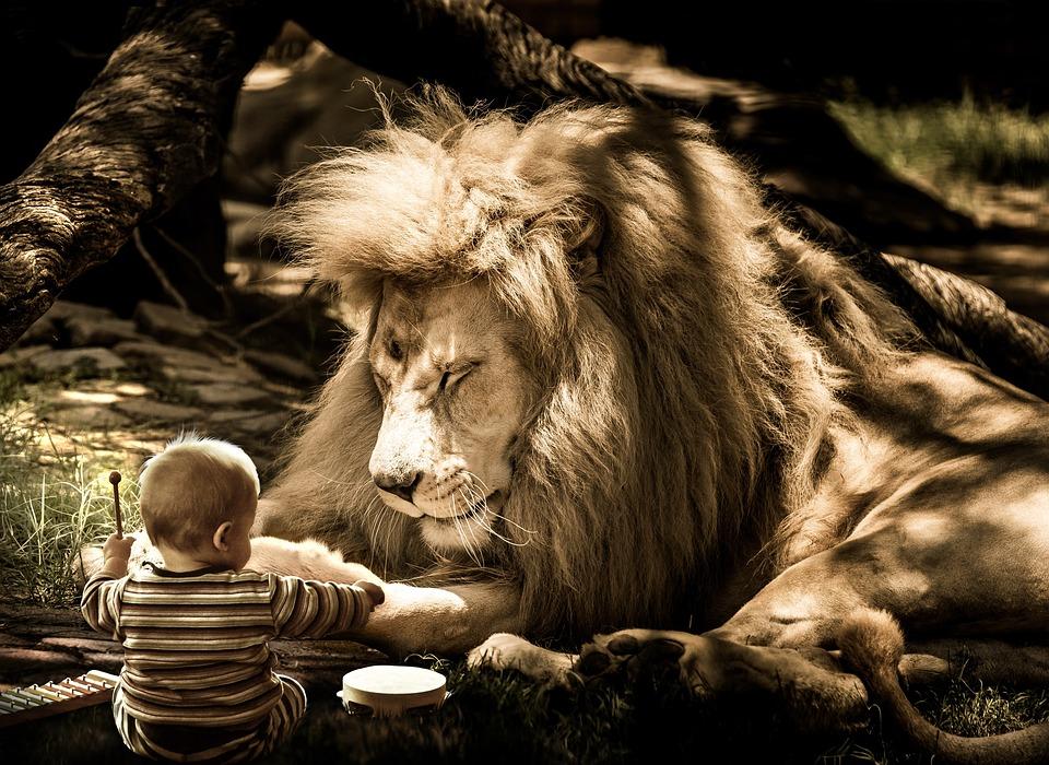 Mammal, Nature, Portrait, Animal, Cat, Big Cat, Lion