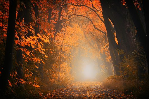 Light, Forest, Away, Path, Trees, Autumn