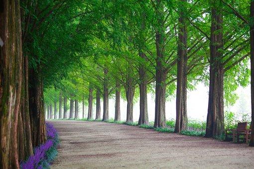 木, 自然, 葉, 公園, 並木道, メタ情報の勝訴, 道, 街路樹, 夏