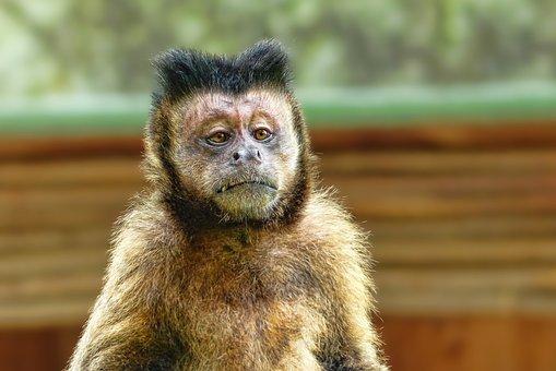 Dunia Binatang, Monyet, Hewan, Potret