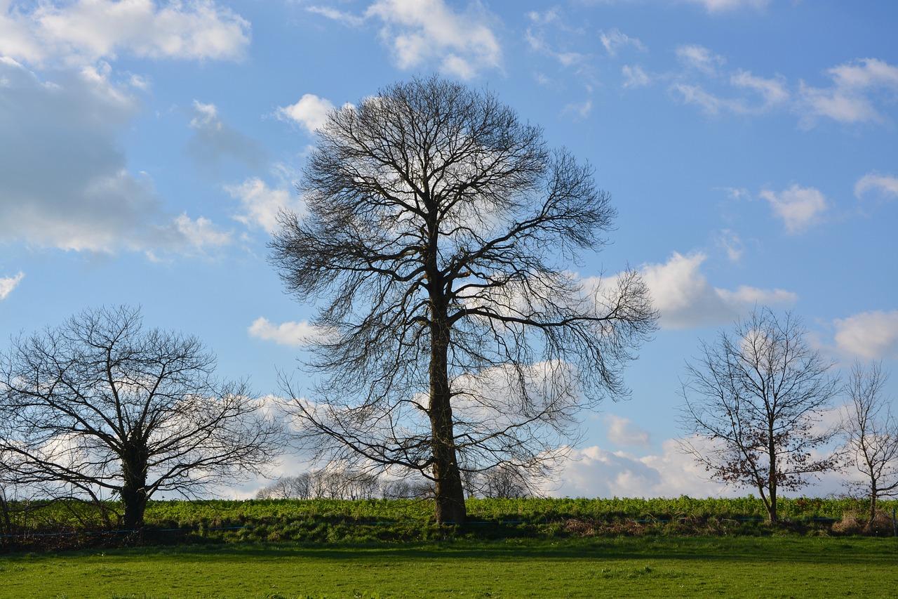 Дерево без листвы фото