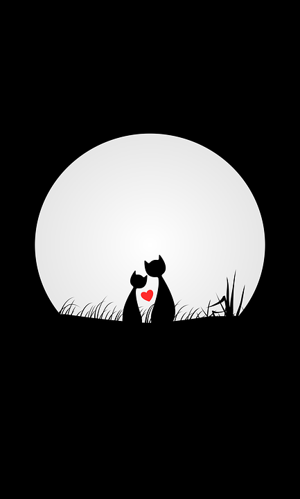 Cats Love Night Free Image On Pixabay