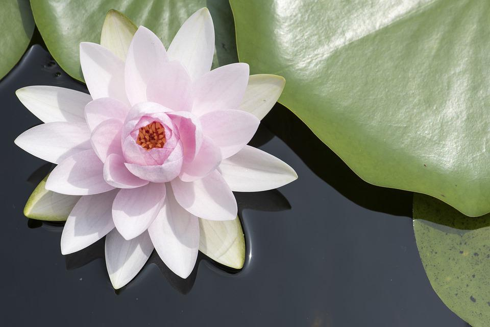 Flowers Tropical Plants Free Photo On Pixabay