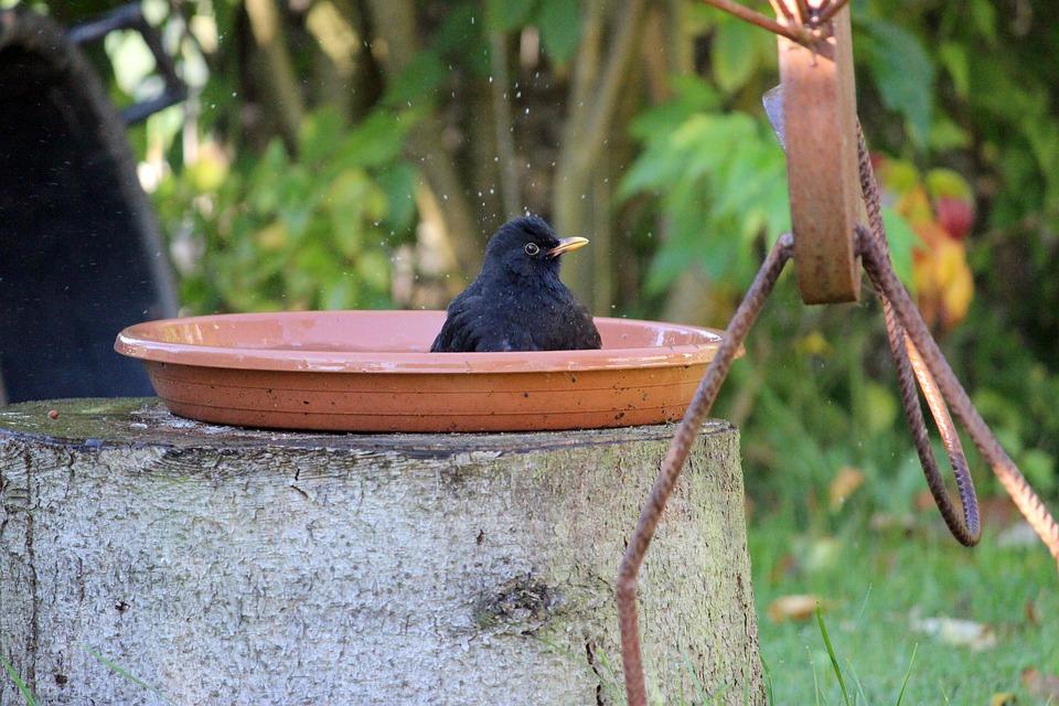 black bird on the bird bath