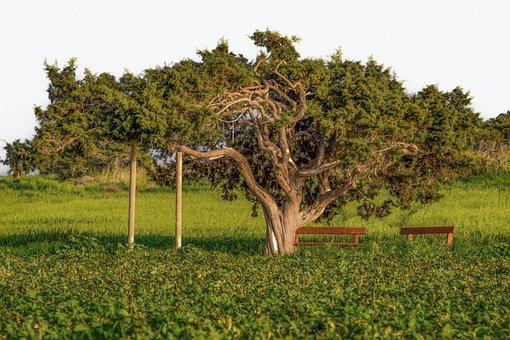 Árvore, Natureza, Grama, Paisagem, Rural