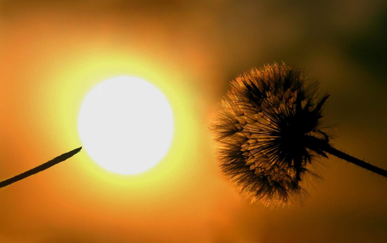 тому картинки солнца или одуванчика клетки вольеры