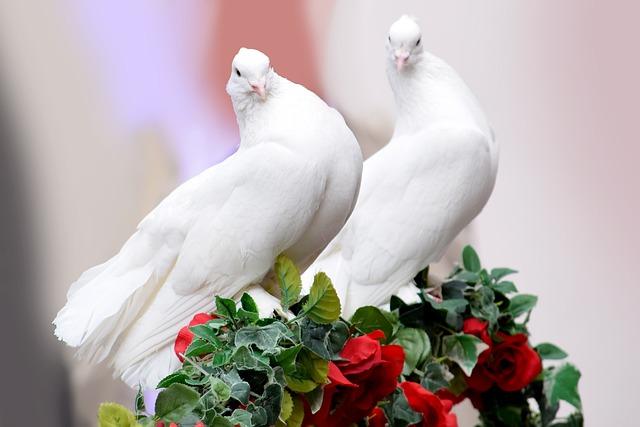 Gratis Foto Dove Bruiloft Het Huwelijk Gratis