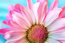Flower, Nature, Flora, Petal