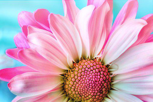 2,000 Beautiful, HD Flower Wallpapers , Pixabay