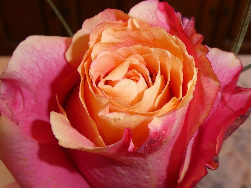 Mawar Bunga Sempurna Foto Gratis Di Pixabay