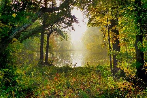 La Naturaleza, Árbol, Parque, Estanque