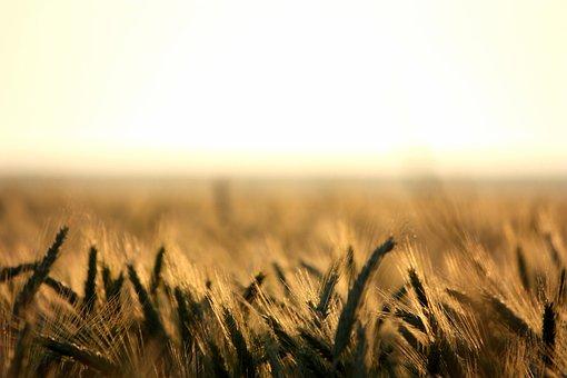 Расширение Союза экспортеров зерна позволит эффективно решать задачи по развитию экспорта АПК