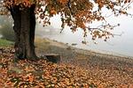 jesień, jezioro, drzewo
