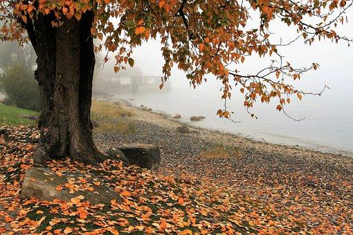 Podzim, Jezero, Strom, Příroda, List