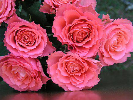 Anniversary bouquet images · pixabay · download free pictures