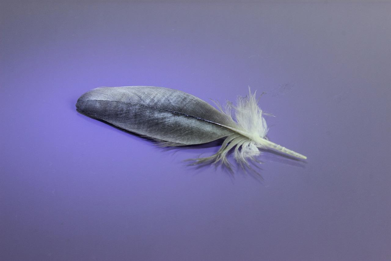 является древние птичье перо показать фото флаг