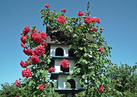 Flower, Rosa Curly, Red, Bush, Birdhouse