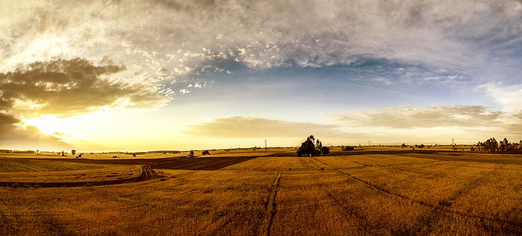 100 Free Punjab India Images Pixabay
