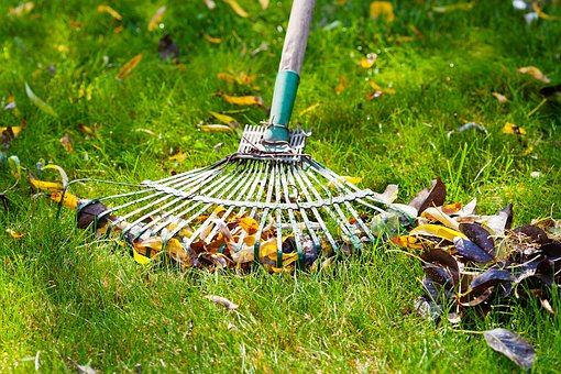 Grass, Garden, Nature, Lawn Care, Summer