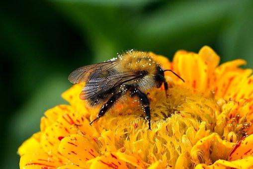 Přírody, Hmyz, Květina, Pyl, Rostlin