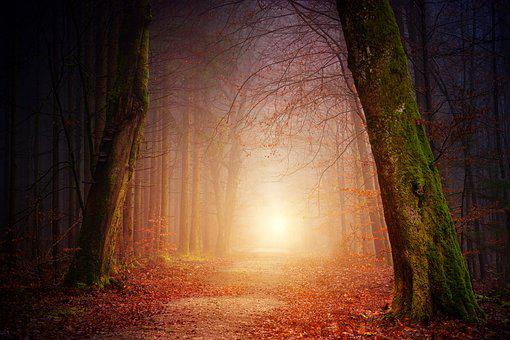 Nature, Forest, Trees, Light, Sun, Fog