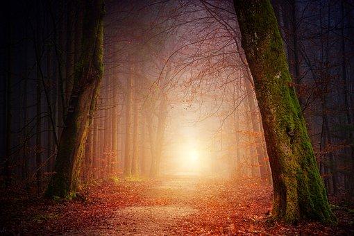 自然, 森林, 树, 光, 太阳, 雾, 有雾, 日落, 阴影, 秋, 心情
