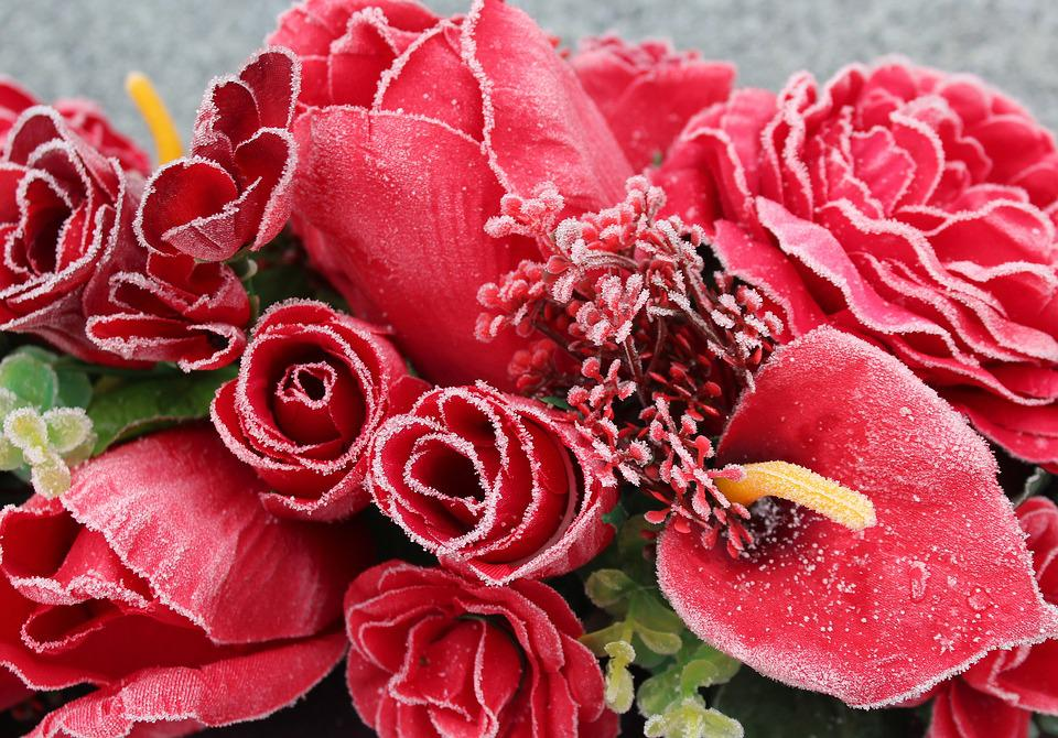Blume rose bltenblatt rote kostenloses foto auf pixabay blume rose bltenblatt rote blumen farbe frost thecheapjerseys Images
