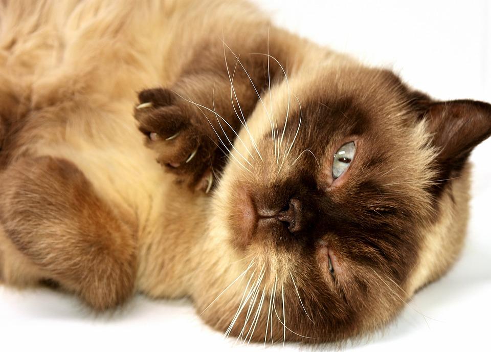 www zadarmo mačička fotky com lesbické sestra zvádza