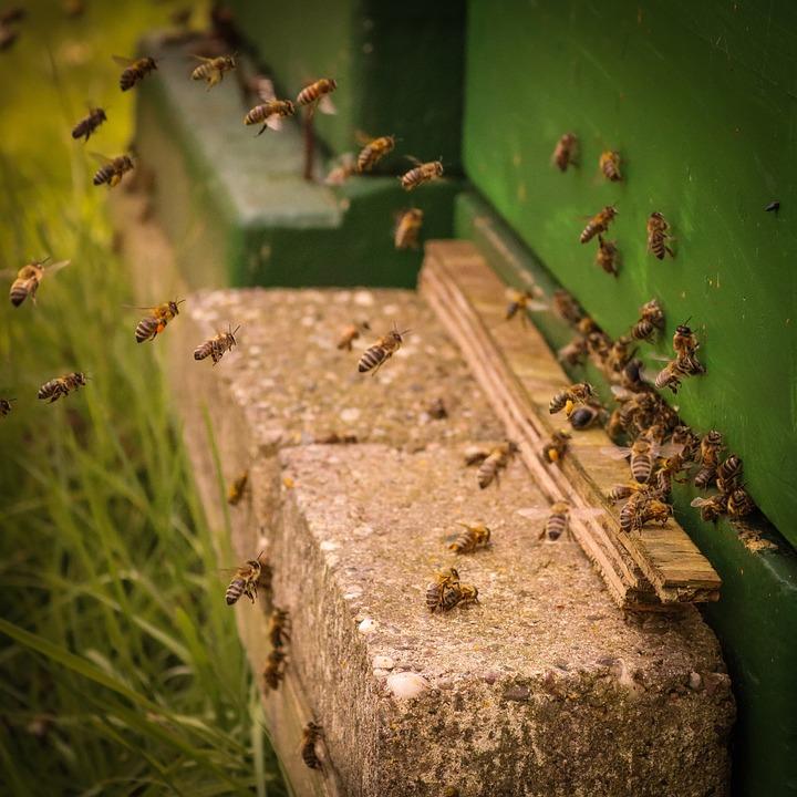 蜂箱,性质,亲爱的坚持,水泡,吃,营养,关闭,蜂蜜,宏,动物脚上蚊子蜜蜂图片