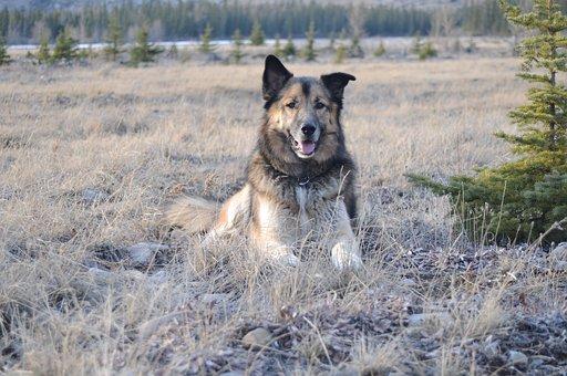 Kostenlose futterproben hund