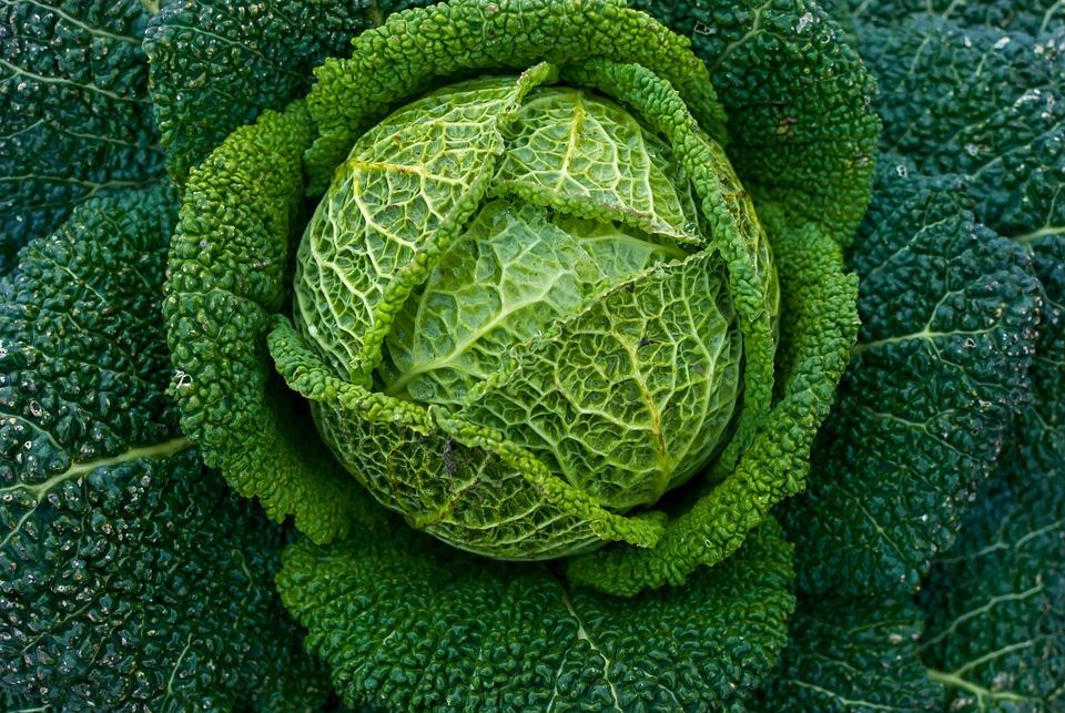 Feuille, Plante, Nature, Chou, Vert, Potager, Garçon