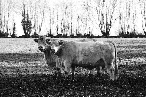 Британская мясная индустрия «в панике» из-за Брексита