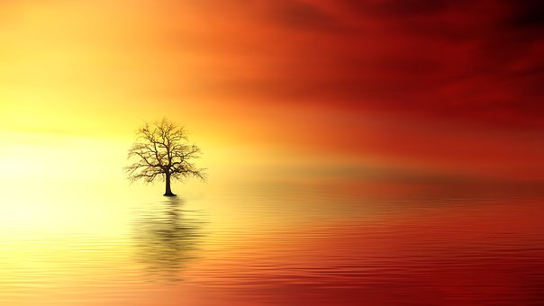 Sunset, Tree, Dawn, Sun, Nature, Dusk